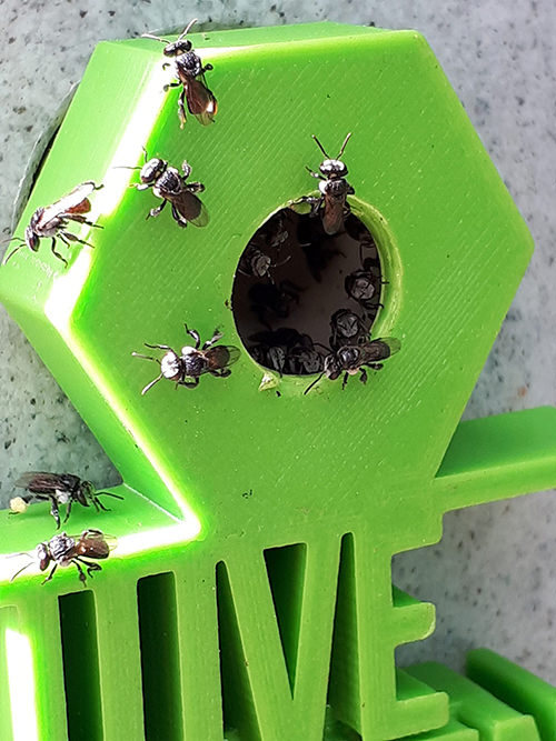 Australian-stingless-native-bees-green